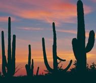 Tucson_sunset_mtcvb