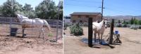 Wapike - before & after bath