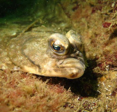 Grumpyfish