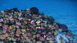 01_amazon_reef.adapt.1900.1