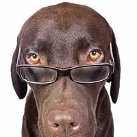 Square_200_dog-picture-photo-chocolate-lab-glasses