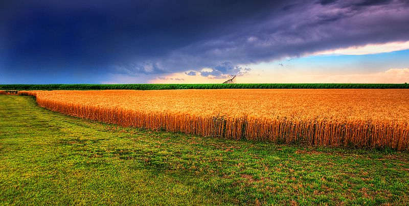 800px-Kansas_Summer_Wheat_and_Storm_Panorama